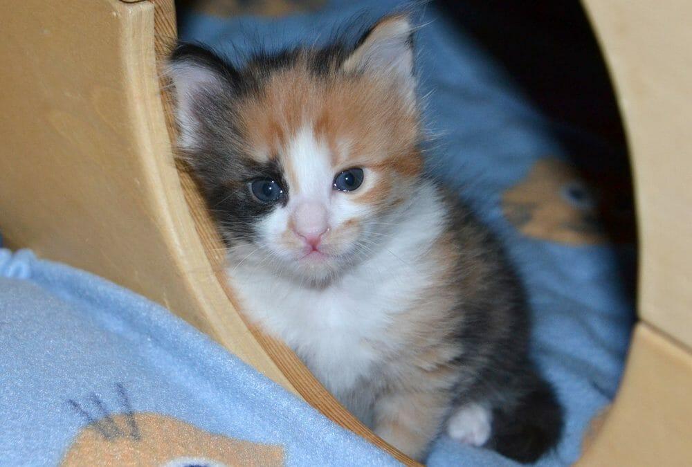 Die katzenfreundliche Tierarztpraxis